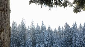 Beautiful winter landscape in mountain. Forest with trees in snow on sunny winter day. scenic view of snowy forest. Pine trees cov. Ered with ice and snow on stock footage