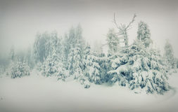 Beautiful winter landscape in mountains Royalty Free Stock Images