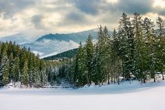 Beautiful winter landscape in mountains. Spruce forest around the snow covered meadow on a cloudy day. composite imagery royalty free stock photo
