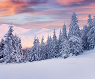 Beautiful winter landscape in mountains. Sunrise Stock Images