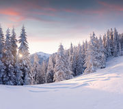 Beautiful winter landscape in mountains. Sunrise Stock Photo