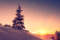 Beautiful winter landscape in mountains. View of snow-covered conifer trees and snowflakes at sunrise. Merry Christmas and happy