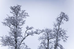 A beautiful winter landscape in nordic Europe Stock Photos
