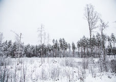 A beautiful winter landscape in nordic Europe Royalty Free Stock Photography