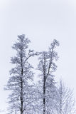 A beautiful winter landscape in nordic Europe Stock Image