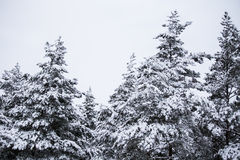 A beautiful winter landscape in nordic Europe Royalty Free Stock Image