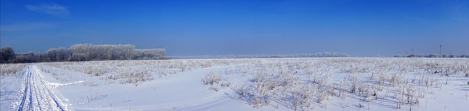 Beautiful winter landscape, panorama   winter forest Stock Images