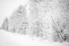 Trees covered with lots of snow royalty free stock photography