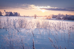 Beautiful winter landscape with rising sun in field covered with snow Stock Photos