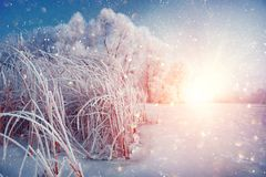Beautiful winter landscape scene background with snow covered trees and iced river stock photos