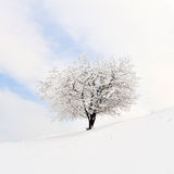 Beautiful winter landscape Stock Photography