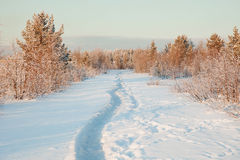 Beautiful winter landscape with snow Stock Images