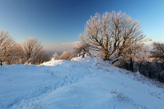 Beautiful winter landscape with snow Royalty Free Stock Photo