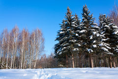 Beautiful winter landscape with snow Stock Photo