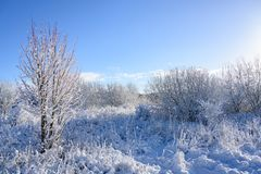 Beautiful winter landscape with snow covered bushes and a blue sky, copy space stock photo