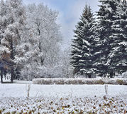 Beautiful winter landscape with snow-covered fir trees Royalty Free Stock Photo