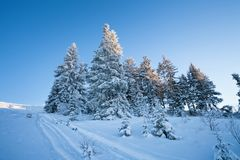 Beautiful winter landscape with snow covered fir trees and skis Stock Photography