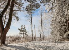 Beautiful snowy winter landscape. Beautiful winter landscape of snow-covered nature, trees in frost Royalty Free Stock Images