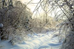 Beautiful winter landscape with snow covered road on frosty day stock images