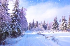 Beautiful winter landscape with snow covered road on frosty day royalty free stock images