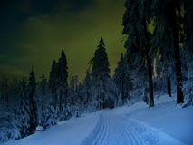 Beautiful winter landscape with the snow covered spruce trees Stock Photography