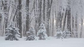Beautiful winter landscape with snow covered tree. Heavy Snowfall in winter stock video footage