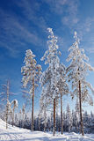 Beautiful winter landscape with snow covered trees Stock Images