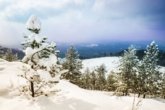 Beautiful winter landscape. With snow-covered trees Royalty Free Stock Photography