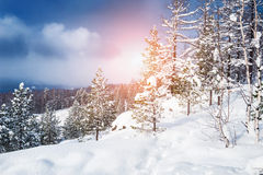 Beautiful winter landscape. With snow-covered trees Royalty Free Stock Images