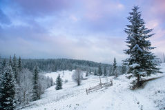 Beautiful winter landscape with snow covered trees. Royalty Free Stock Photo