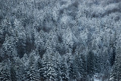 Beautiful winter landscape, snow covered trees. Beautiful winter landscape with snow covered trees royalty free stock images
