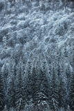 Beautiful winter landscape, snow covered trees. Beautiful winter landscape with snow covered trees stock photos