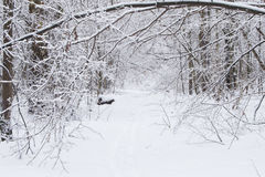 Beautiful winter landscape with snow covered trees.  stock photos