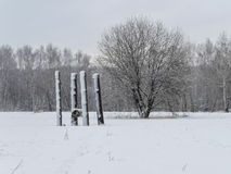 Beautiful winter landscape with snow covered trees.  royalty free stock image