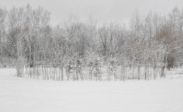 Beautiful winter landscape with snow covered trees.  royalty free stock photography
