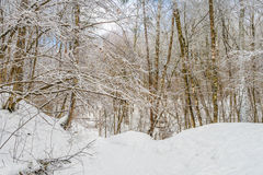 Beautiful winter landscape with snow covered trees.  stock photo