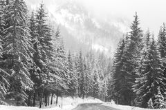 Beautiful winter landscape with snow covered trees Royalty Free Stock Photo