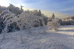 Beautiful winter landscape with snow covered trees Royalty Free Stock Images