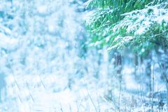 Beautiful winter landscape with snow covered trees. Fir Christmas tree on the foreground. Free space stock images