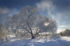 Beautiful winter landscape with snow covered trees Royalty Free Stock Photography