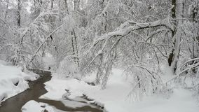 Beautiful winter landscape with snow covered trees and frozen forest river. Trees covered with fresh snow in a cold and snowy winter day, and small forest river stock footage