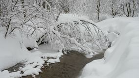 Beautiful winter landscape with snow covered trees and frozen forest river. Trees covered with fresh snow in a cold and snowy winter day, and small forest river stock video footage