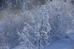 Beautiful winter landscape with snow covered trees Stock Photography