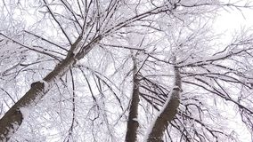 Beautiful winter landscape with snow covered trees. Heavy Snowfall in winter stock footage