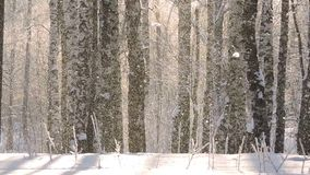 Beautiful winter landscape with snow covered trees. Heavy Snowfall in winter stock video footage