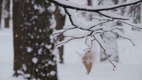 Beautiful winter landscape with snow covered trees. leaf swinging in the wind stock footage