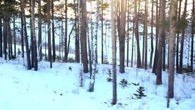 Beautiful winter landscape with snow covered trees. And lift to the ski resort. 1920x1080 stock video footage