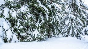 Beautiful winter landscape with snow covered trees. Winter mountains. Beautiful winter landscape with snow covered trees stock video footage
