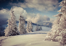 Beautiful winter landscape with snow covered trees. Stock Image