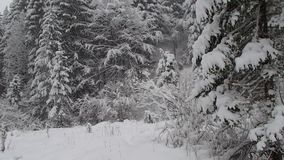 Snow fall on mountain forest stock footage
